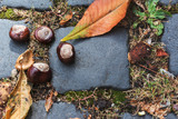 wild chestnuts, on cobblestone street, eurpa - 221687913