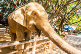 Reaching elephant trunk - 221692957