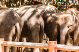 Elephants sticking together - 221693366