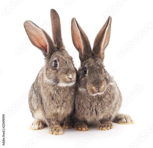 Dwa szare króliki.