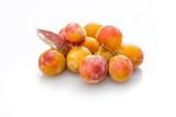 Aprikosen Marillen reif weiß freigestellt