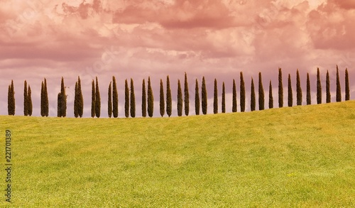 Foto Murales Typical tuscan countryside with cypress.