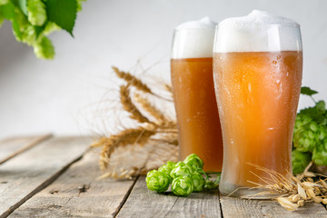 Beer and ingredients hops, wheat, barley on wood background, copy space © anaumenko
