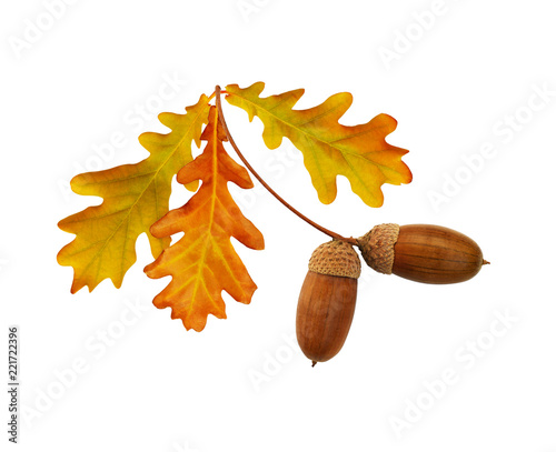 Leinwandbild Motiv Autumn yellow and brown oak acorns and leaves