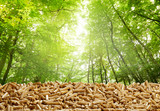 Layer of organic wood pellets in a green forest - 221728798