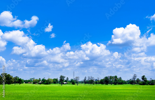 Bright blue sky and cloud with meadow tree and green rice fields - 221733791