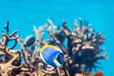 Coral reef underwater - 221739107