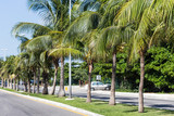Caribbean street road with palm trees - 221753948