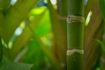 Hawaiian Plants © Bogdan