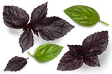 Leaves of green and purple basil on a white background. View from above - 221779759