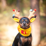 Dogs in deer costume, Autumn mood, fantastic deer dog