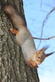squirrel - 221796345