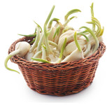 Garlic germinated - 221797575