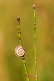 Small slug on grass illuminated by sunset - closeup - 221807147