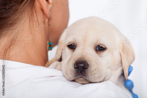 Labrador puppy dog looking over the shoulders of woman veterinary doctor