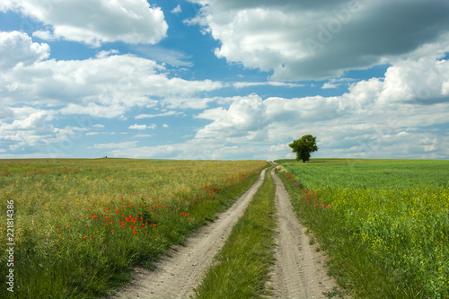 Foto Murales Dirt road through fields, a lonely tree and clouds in the sky