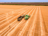 Harvester Unloads the Crop into a Truck. Aerial View - 221828572