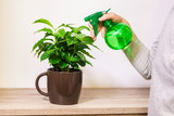 Florist spraying water on green plant leave - 221832336