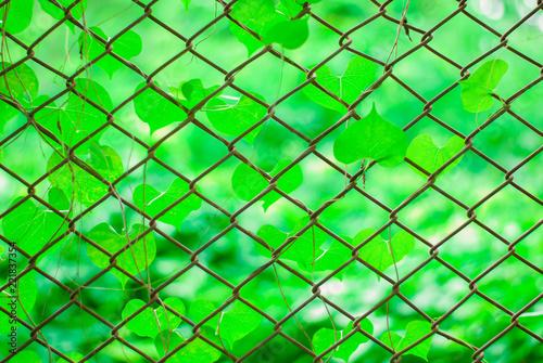 Leinwandbild Motiv beautiful weed, beautiful unwanted flora on fencing