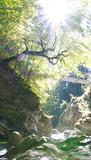 Brücke über die Schlucht - 221839972