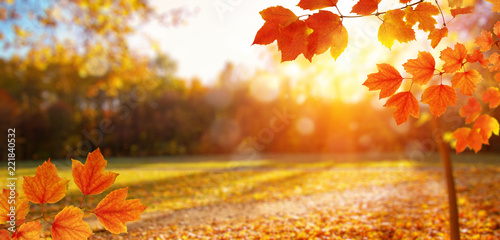 Autumn leaves on the sun and blurred trees - 221840532