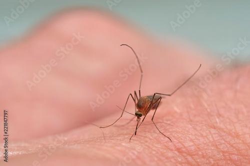 Mücke saugt Blut auf der Haut eines Fingers, Makroaufnahme mit unscharfem Hintergrund - 221847797