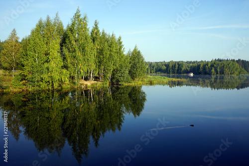 Fototapeta Birch trees near lale