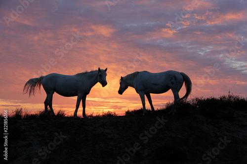 Foto Murales chevaux et lever du soleil