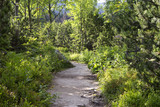 Path in beautiful nature of Tatra mountain, Slovakia. - 221861921