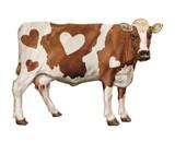 vache laitière, animal,coer, ferme, bétail, roux  - 221862750
