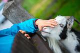 Ziege wird gestreichelt, Streichelzoo - 221867988