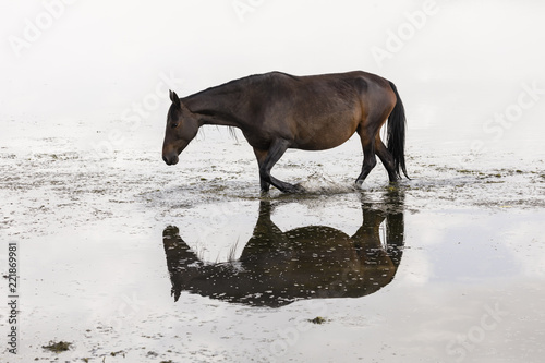 A horse is reflected in Song Kul lake in Kyrgyzstan