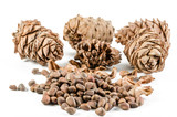 pine nut and cone - 221878935