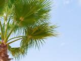 Green palm tree on blue sky background - 221882380