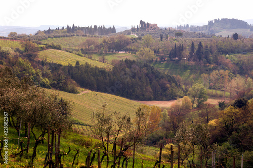 Foto Murales Typical Tuscan landscape