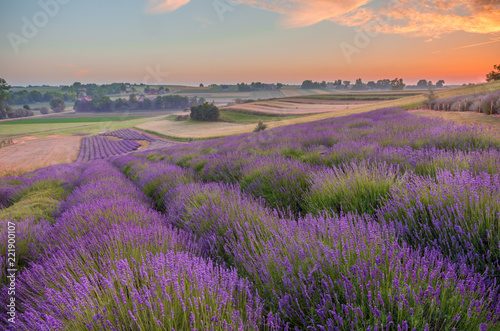 Blooming lavender fields in Poland, colorful sunrise - 221900107
