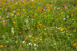 Summer meadow of multitude flowers. Variety of colorful rural wild flowers in grass. Blossom in countryside garden. Field of flowers. Idyll garden.