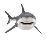 Great White Shark Isolated - 221932931