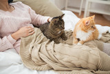 pets, hygge and people concept - close up of female owner with red and tabby cat in bed - 221937370