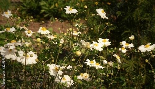 Foto Murales fleurs