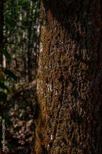 Tree Bark - 221942788