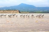 Flamingos in Cyprus