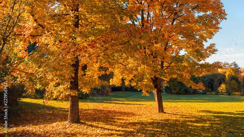 Leinwandbild Motiv Atumn scene in the garden-autumn color backround