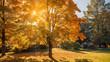 Leinwandbild Motiv Autumn sun shining through the trees-fall colors concept