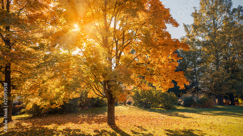 Leinwanddruck Bild Autumn sun shining through the trees-fall colors concept