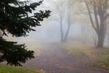 Empty park at foggy autumn morning - 221959797