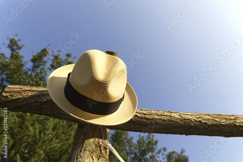 Kapelusz na drzewie w lecie