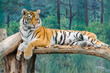 Tiger in the Odesa biopark zoo