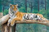 Tiger in the Odesa biopark zoo - 221968128