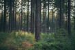 Leinwandbild Motiv Tree trunks in pine woods.
